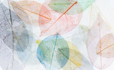 Wall Mural - macro colorful skeleton and leaf veins