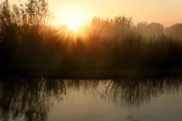 Dawn on the lake. The sun in the fog above the water and grass on the shore. the rays of the sun at...
