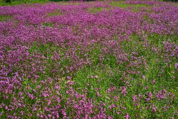 Fototapeta dywan kolorowych kwiatów, obraz