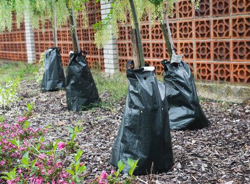 Watering irrigating bag tree, green water bag in park
