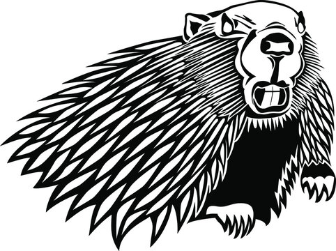 Vector illustration of a fierce beaver in black and white. Stylized team mascot. Angry beaver showing teeth.