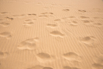 sandy background with ripples and footprints