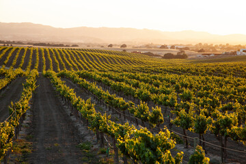setting sun flooding golden light over vineyard countryside with rolling hills