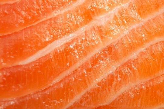 Foods rich in protein and selenium, expensive seafood and lean meat concept with full frame macro close up picture of a fresh pink with white stripes salmon slice