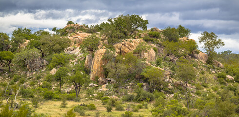 Wall Mural - Rocky outcrop or koppie Afsaal area