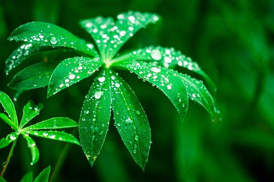 Regentropfen Wasser auf Blatt Grün Glitzern Funkeln Makro Natur
