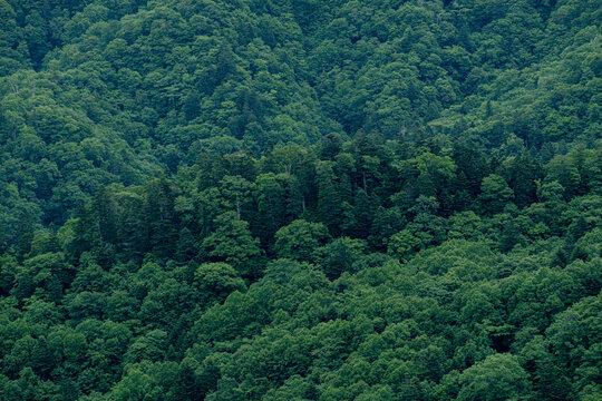 積丹半島の森