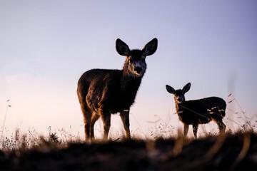 Foto auf Acrylglas Hirsch deer in the meadow
