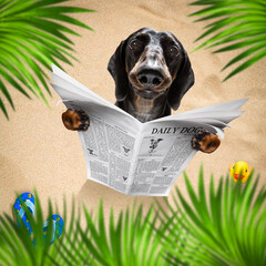 Fotorolgordijn Crazy dog dog at the beach reads newspaper