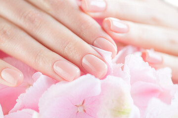 Beautiful Healthy nails. Manicure, Beautiful Woman's hands, Spa. Female hands with beautiful natural pink french elegant manicure. Soft skin, skincare concept. Salon, treatment