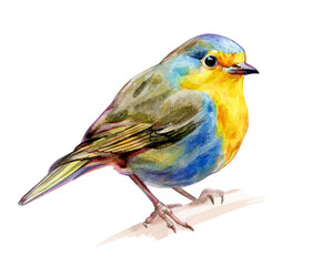 European Robin isolated, watercolor illustration.