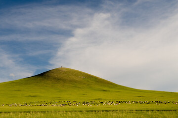 Sheep herd feeding on delicious lush grass on a grassland meadow below a hill with religious ovoo, Mongolia