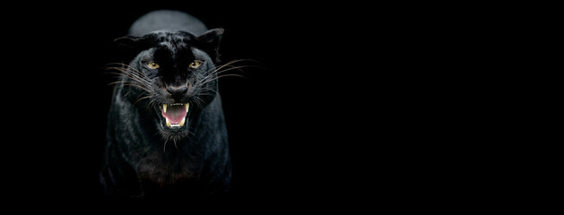 Poster Panther Template of a Black panther with a black background