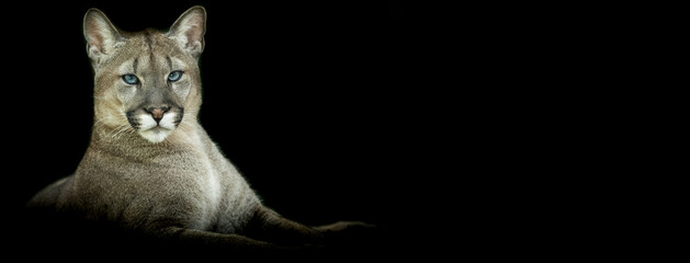 Template of a Puma with a black background