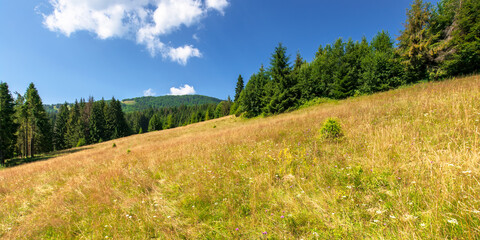 Wall Mural - meadows on the hill of mountain in summer. idyllic landscape on a sunny day. beech and spruce trees around the wide glade
