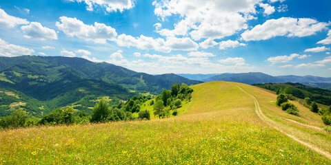 Wall Mural - path through the meadow in mountains. sunny summer landscape of carpathian countryside. white fluffy clouds on the blue sky