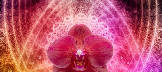 Photo Blinds Orchid Orchideen composing mit spirituell abstrakten hintergrund.