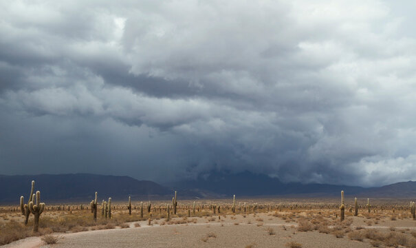 Panorama view of the desert, mountains and giant cactus, Echinopsis atacamensis, under a dramatic stormy sky.