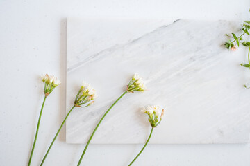 natural  beauty background.  white flower on marble .
