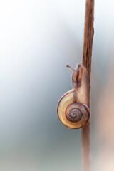 Fototapeta Ślimak w porannym świetle obraz