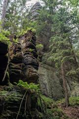Grüner Märchenwald mit hängenden Gärten auf Sandstein - Felsen, Hängepflanzen, Elbsandsteingebirge - sächsische Schweiz