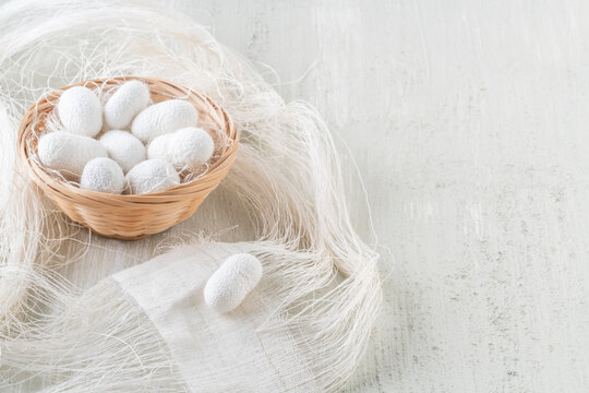 natural silkworm cocoons are source of silk thread, textile