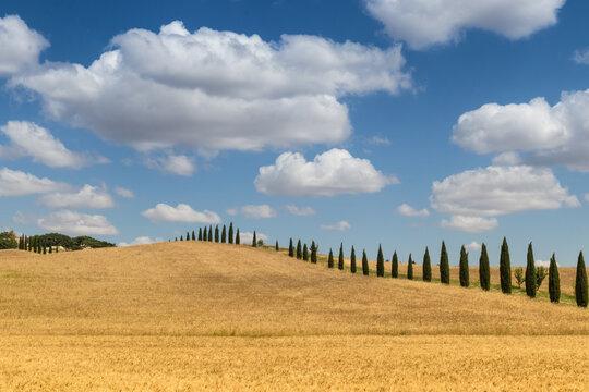 Campo di grano Matera Basilicata
