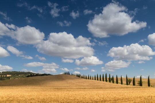 I campi di grano della Basilicata Matera
