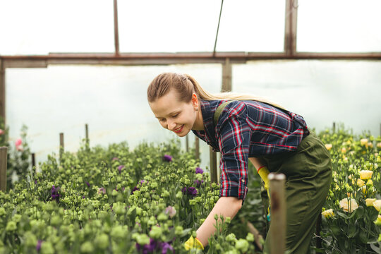 Beautiful gardener woman working on flowers in greenhouse. Small floral busines