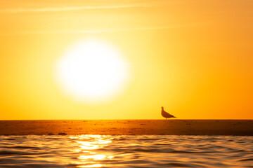 Photo sur Plexiglas Jaune de seuffre Nascer do Sol e Pássaros