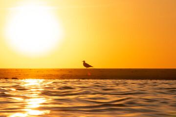 Foto op Plexiglas Zwavel geel Nascer do Sol e Pássaros