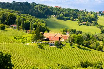 vineyard at the Austrian Slovenian border in Styria