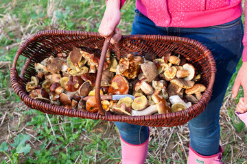 basket with forest mushrooms from Czech Republic