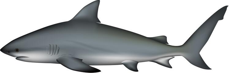 サメ イラスト (オオメジロザメ)