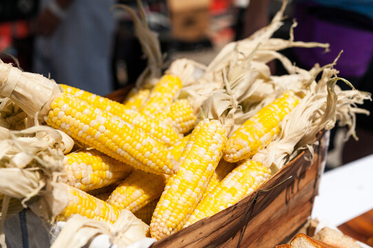 fresh maize bicolor corns with husks in a wood basket