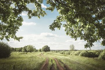 Dirt road in the meadow. Summer country landscape.