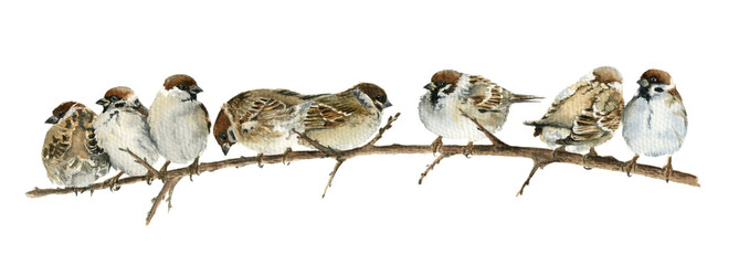 Watercolor drawing sparrows sitting on a branch
