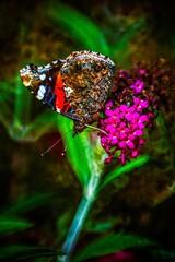 Motyl