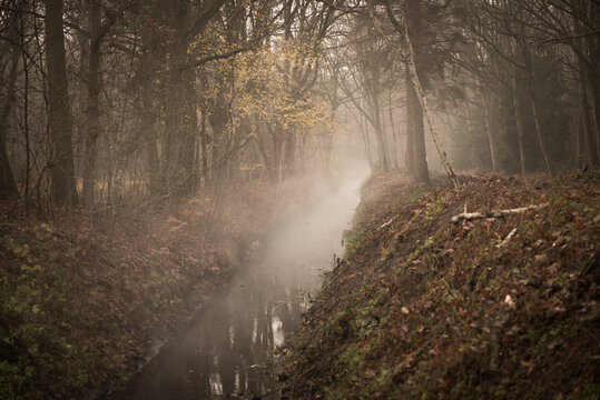 Mysterious forest landcape with fog above creek in autumn in warm colors