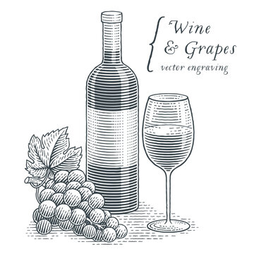 Wine bottle, glass of wine and grapes. Hand drawn engraving style illustrations.