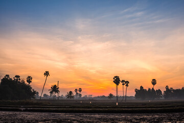 sugar palm trees on the sunrise background