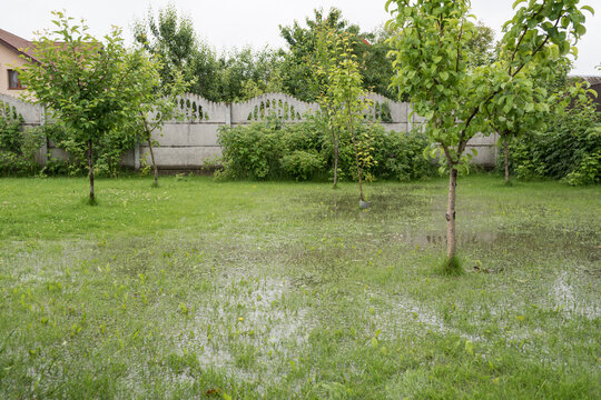 The garden and yard are flooded. Consequences of downpour, flood. Rainy summer, Ukraine.