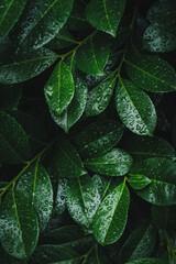 Zielone li艣cie mokre od deszczu.