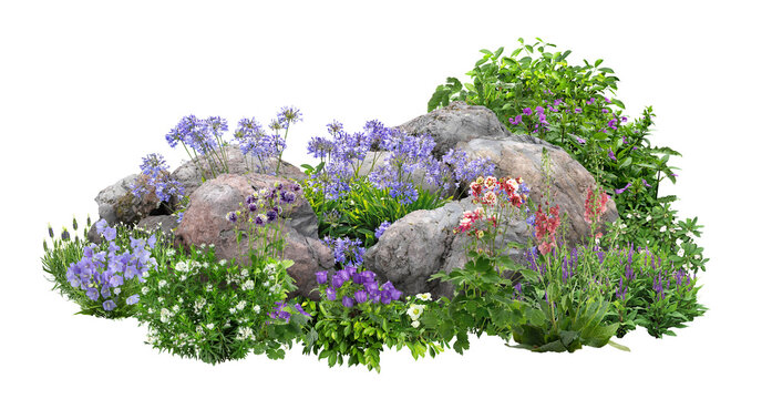 Cutout rock surrounded by flowers. Garden design isolated on white background. Flowering shrub and green plants for landscaping. Decorative shrub and flower bed.