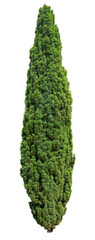 Conifer. Cut out pine tree isolated on white background . Cutout evergreen tree in summer. High quality clipping mask for professional composition.