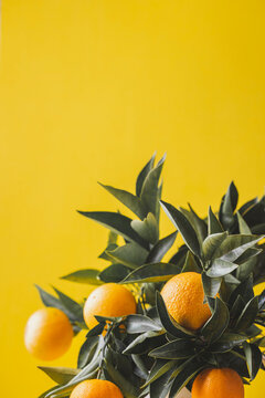 Orange tree branches bouquet with orange fruits on yellow background