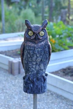 Plastic brown owl in the vegetable garden