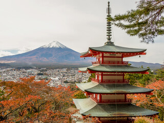 Photo sur Aluminium Japon View of mountain fuji and Chureito Pagoda, Yamanashi, Japan.Beautiful landmark travel in autumn season.