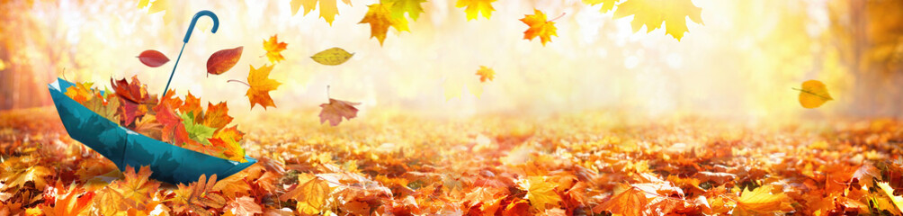 Beautiful autumn background landscape. Carpet of fallen orange autumn leaves in park and blue umbrella. Leaves fly in wind in sunlight. Concept of Golden autumn, ultra wide format.