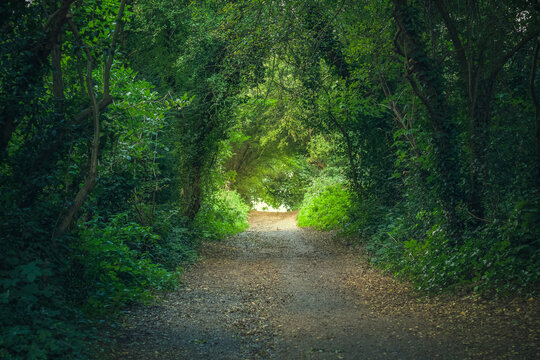 Tree tunnel at Hampstead Heath in London